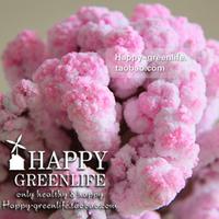 8cm Christmas gift magic cherry tree magic sakura artificial flower  =SDSm5