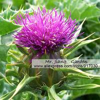 Milk Thistle Seed * 1 Gram  ( 40 Seeds ) * Siybum Marianum *  Organic seed * Herbal Medicine Flower * Free Shipping