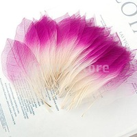 Free Shipping 50Pcs Natural Magnolia Skeleton Leaf Leaves Card Scrapbook - Pink White