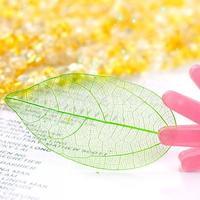 Free Shipping 50Pcs Natural Catbrier Skeleton Leaf Leaves Card Scrapbook - Green