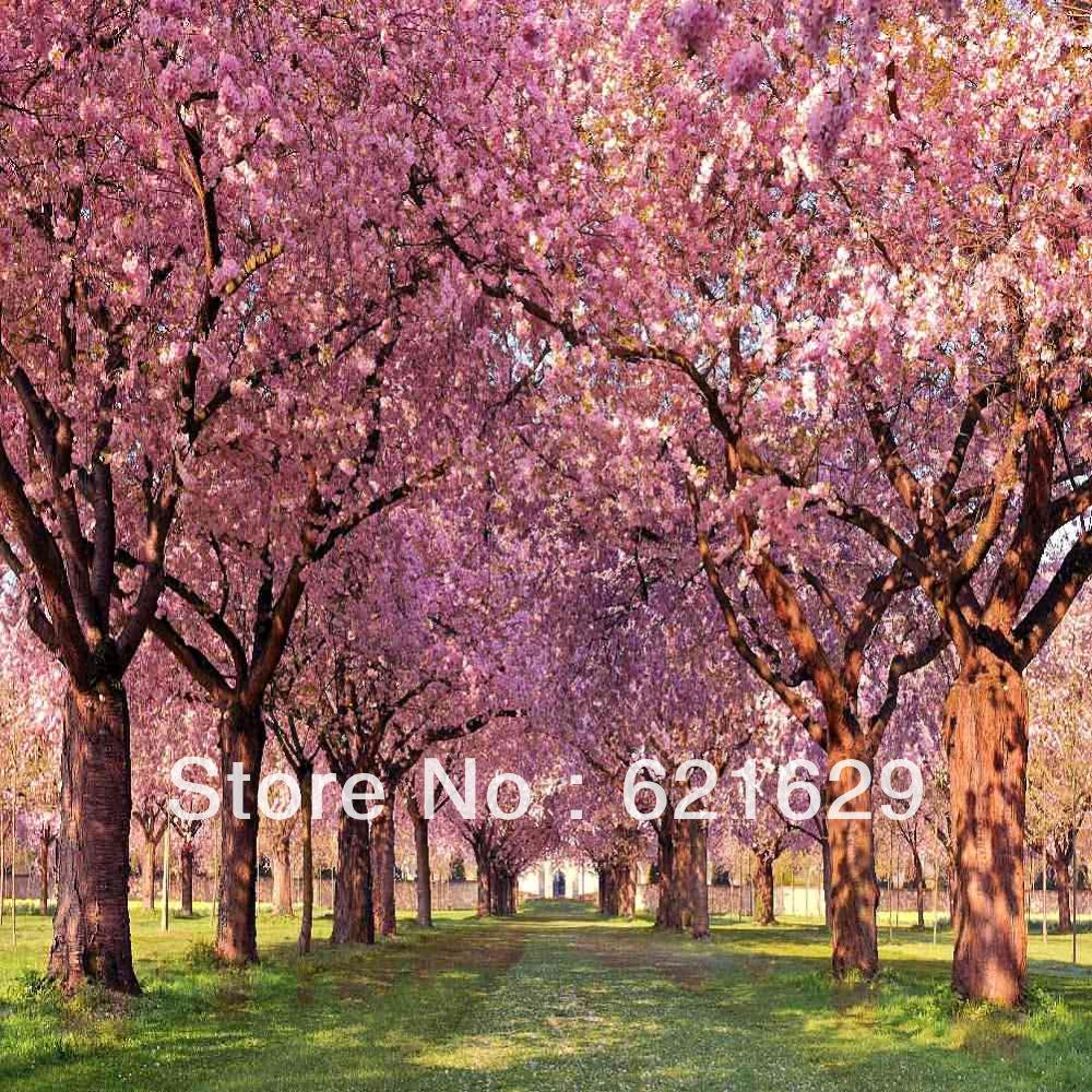 ... dicat-pemandangan-fotografi-Background-foto-studio-Latar-belakang.jpg