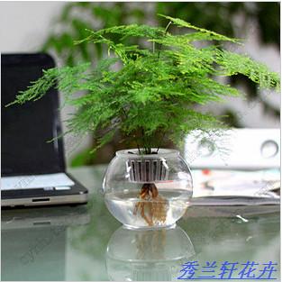fice desk small bonsai hydroponic asparagus small bonsai
