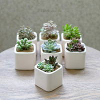 Quadripartite minipot square white ceramic meat flower pot combination basin matt glossy