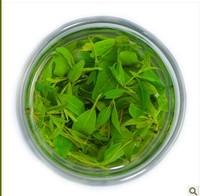 China Organic Kuding green Tea Kuding Cha Ilex latifolia Thunb Health Tea the tea hleath care chinses china Free Shipping