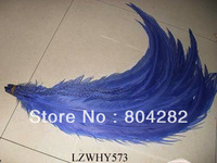 70-80cm Long Size Dyed Blue Silver Pheasant Feathers EMS Free Shipping 100pcs/lot