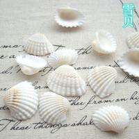 Natural shell diy tank aquarium yangtz decoration white shell sallei 2-3cm  conch