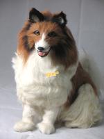 Shepherd-dog dog collie 24.5cm