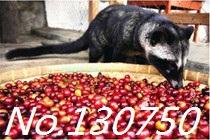 Kopi Luwak Coffee civets Kopi Luwak specialty Coffee Beans to false a compensate ten 100g