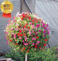 bonsai plant bulbs freesia flower seeds bonsai flowers and plants bonsai indoor flowers  - 5 seedball