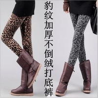 2013 new fashion European and American style thick winter leggings for women&ladies warm velvet pants leggings leopard,LE9023