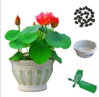 Hydroponic plants bonsai flowers nelumbo nucifera seeds bonsai 20 color bundle  seeds  -30 pcs/lot