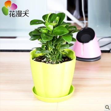 fice desk flowers small potted plants bonsai plants
