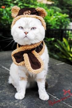 Бесплатная доставка кошка одежда кошка шляпа шарф установить холодной доказательство кошка шейный платок