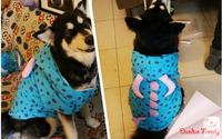 Monsters University, Sullivan cotton winter  cosplay hoodies fit Bulldog, Labrador, Samoyed, Golden Retriever, post it free
