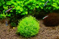 free shipping Aquarium underwater moss ball