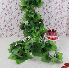 rattan plant promotion