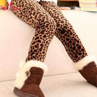 Free Shipping 2013 New Arrival Female Child Winter  Boot Cut Jeans Plus Velvet  Thickening Legging  Size 100CM-160CM