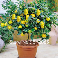 1 pack about 30 pieces Lemon Tree Seeds, shipping by China Post Air Mail !