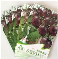 1 Pack 20 Seed Mini Black Dark Black Pearl Tomato Seeds 5 pack Free shipping