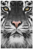 tiger printed oil painting on canvas wall art animals posters prints picture for living room home decorations   no frame