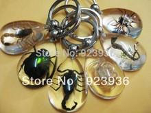 big green beetle price