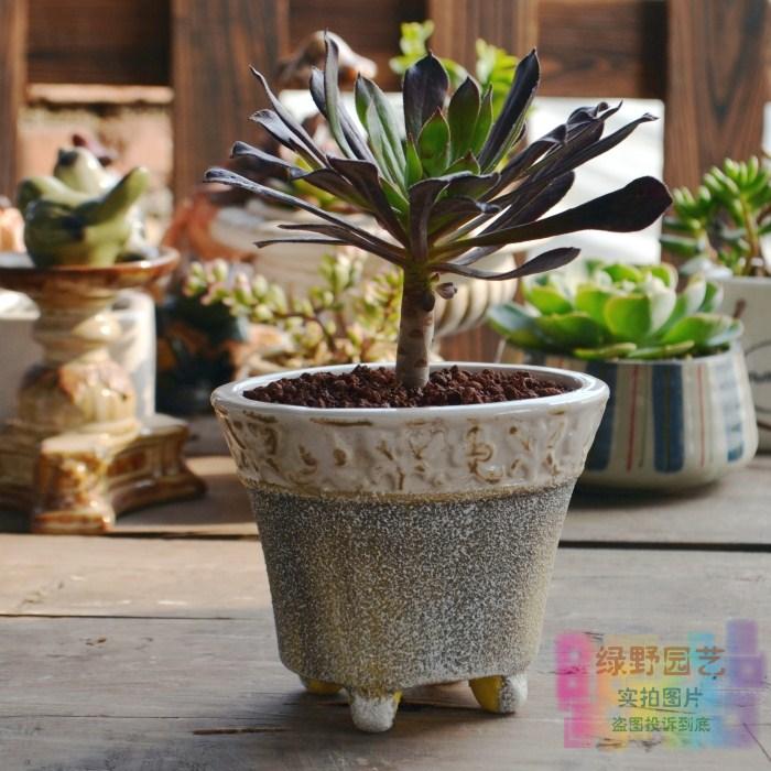 First xitui vintage meat small flower pot terracotta coarse pottery elegant ceramic flower pot(China (Mainland))