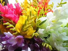 freesia flower price