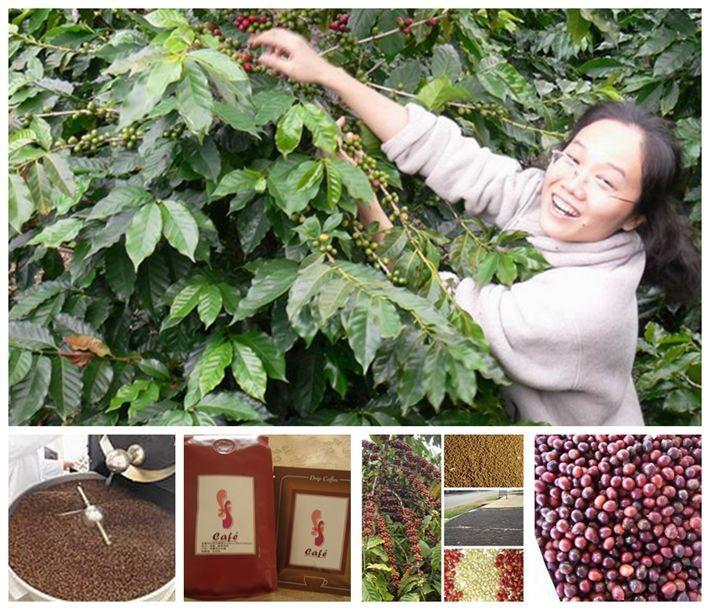 S S cafe Hainan island Local Xinglong coffee 1lb bag caffeine 0 1 strong body smoky