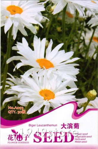 1Bag Daisy Seed 50 Bigger White Chrysanthemum Shasta Flowers Seeds Bright garden plants shop(China (Mainland))