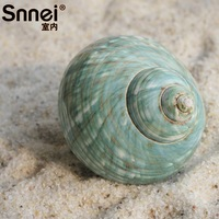 Indoor green snnei oversized screw natural shell home living room decoration dp