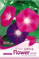 Free Shipping 5 Packs 100 Seed  Mix Color Big Morning Glory Flower Seeds