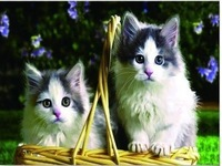 30*40cm New 2014 PET 3D Lenticular High Definition Wall Decor Art Painting of Lovely Cats