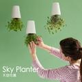 Sky planter flower pot flower bonsai decoration