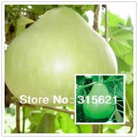 5 Original Packs 40pcs Lagenaria siceraria Spoon Bottle Gourd Seeds Courtyard Vegetable Seeds Free shipping