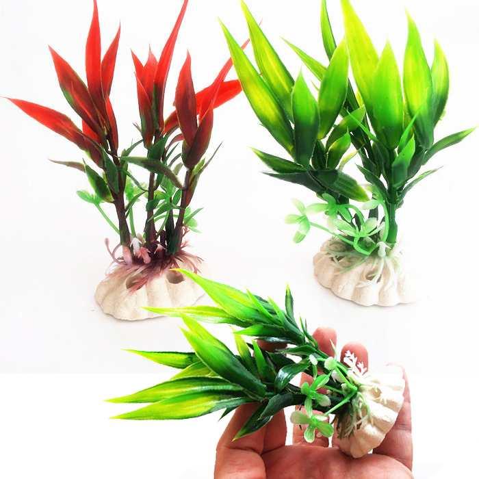 Acquista allingrosso Online piante di bambù in vendita da Grossisti pian...
