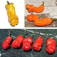 Red Chili Pepper 10 Seeds Unique Peter Funny Penis Pepper Seeds For Home Bonsai Plant