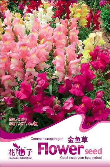 Flower Antirrhinum majus Seeds, Original Package 100pcs Garden bonsai Flower seeds, Easy Grow Snapdragon(China (Mainland))