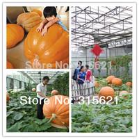 5 Original Packs 25pcs Giant Pumpkin  Seeds Cucurtbita maxima Duch. Seed  Courtyard Vegetable Free shipping