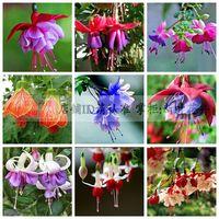 free shipping Fuchsia flower seeds lantern flower indoor balcony bonsai seed flowers seeds  - 200 pcs