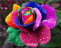 New 60 Pcs Rare Rainbow Rose Flower Seeds Your Lover Multi-color Plants Home Garden
