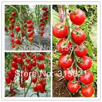 5 Original Bags150pcs Cherry Red Tomato Seeds Bonsai Fruit Seeds Free shipping