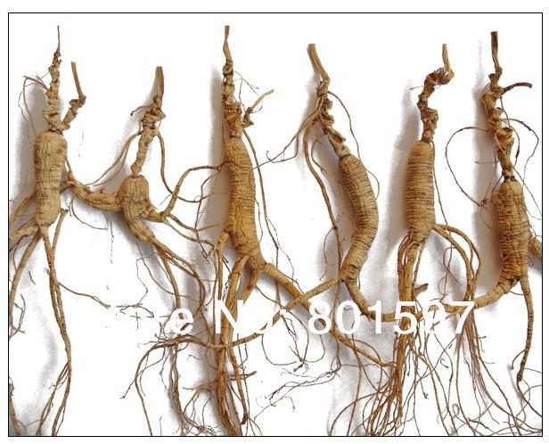 Wild Ginseng Plant Wild Panax Ginseng Root 30