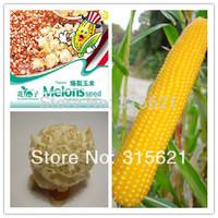 5 Original Bags 150 pcs Popcorn Seeds  Free Shipping