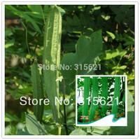 5 Original Bags 40pcs Luffa Acutangula Seeds For Home Vegetable Garden Loofah Seed Climp Plant  Free Shipping