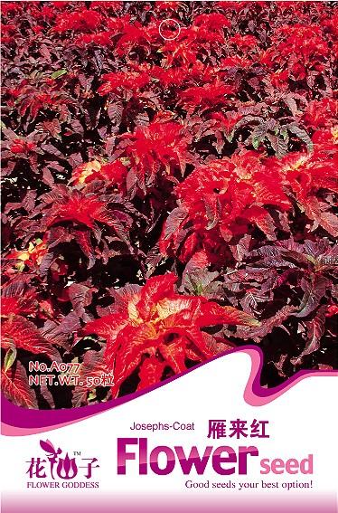 Товары для дома Flower Goddess love/lies/bleeding, 50 , Amaranthus A077 товары для дома flower goddess $5 20 b053