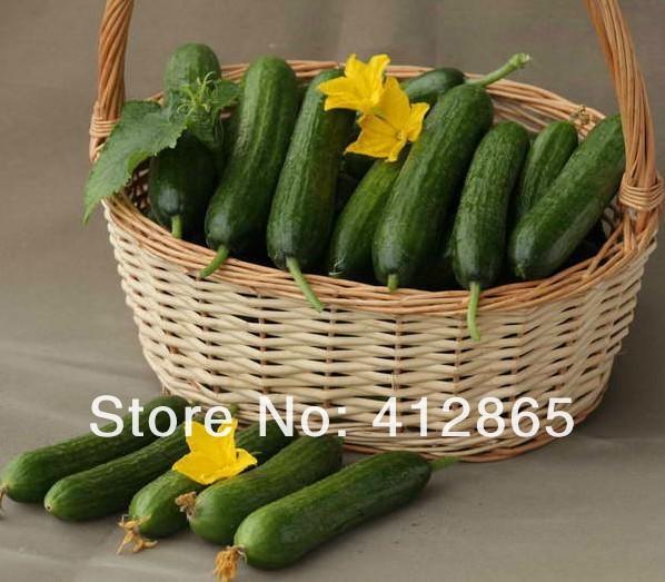 Mix minimum $5 Mix $5 1 original package Hot selling 20pcs fruit cucumber seeds,Cuke Seeds, Green vegetable Seeds(China (Mainland))