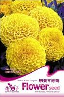 Flower seeds bundle seeds 50 seeds  a005 seed bonsai