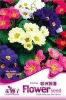 Bonsai seeds green flowers grow - 50 seeds a080 indoor