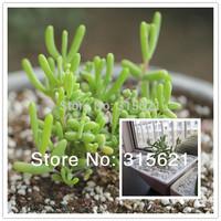 Dicrocaulon Ramulosum DROSANTHEMUM Hispidum Seeds10pcs Health Green Succulent Plant For Home Office Balcony Free Shipping