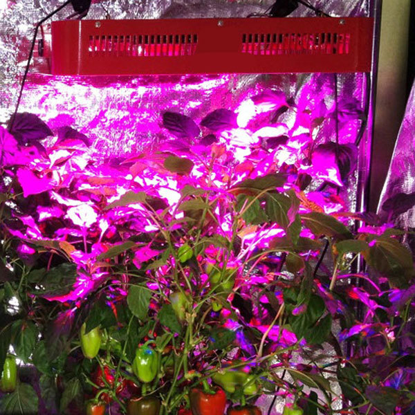 Led Grow Room Design Professional Grow Room Led